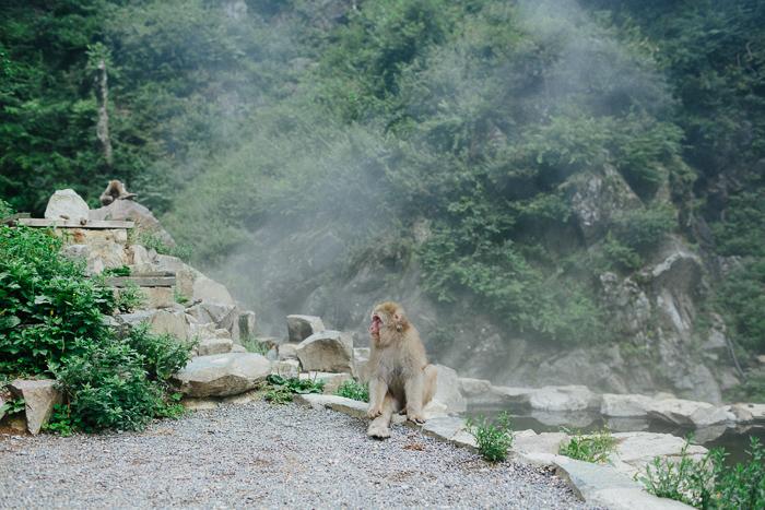 japan-monkey-park-0635.jpg