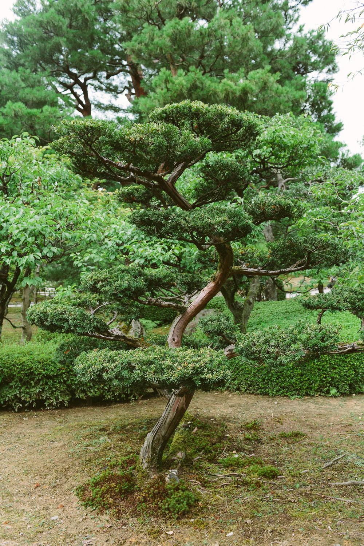 japan-road-trip-0581.jpg