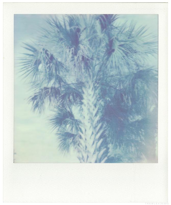 tip_px70_palmtree.jpg