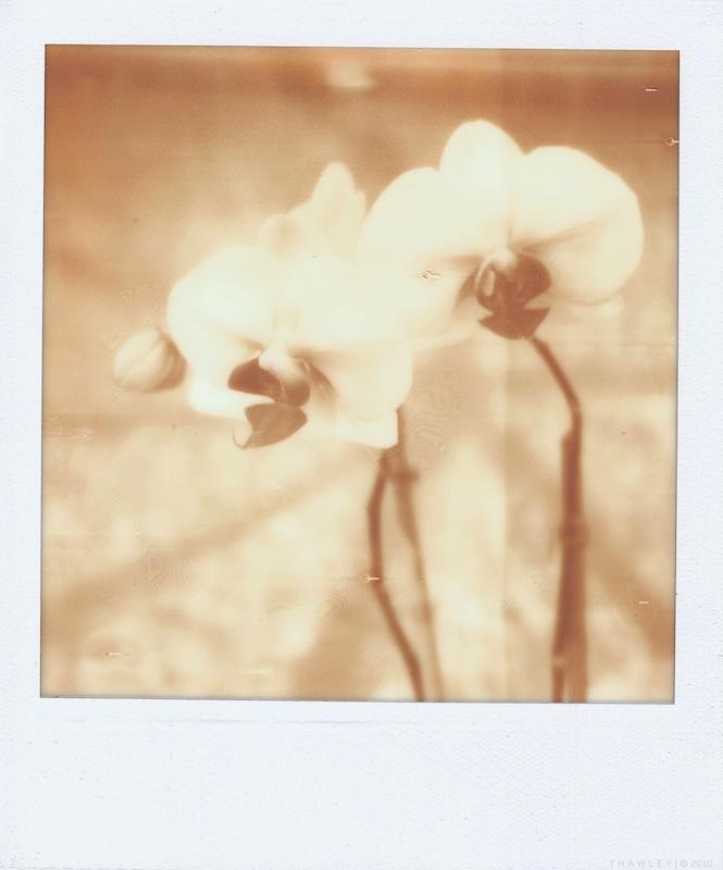 orchid2_600uv+.jpg