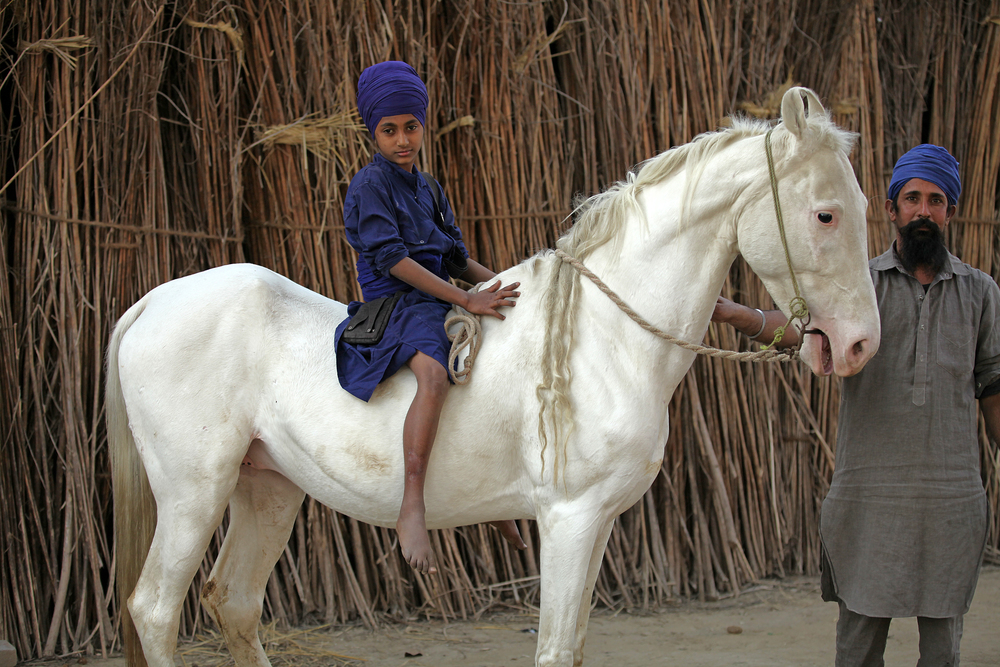 nihang boy full horse.jpg