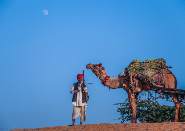 Desert musician and camel on the dunes in Pushkar