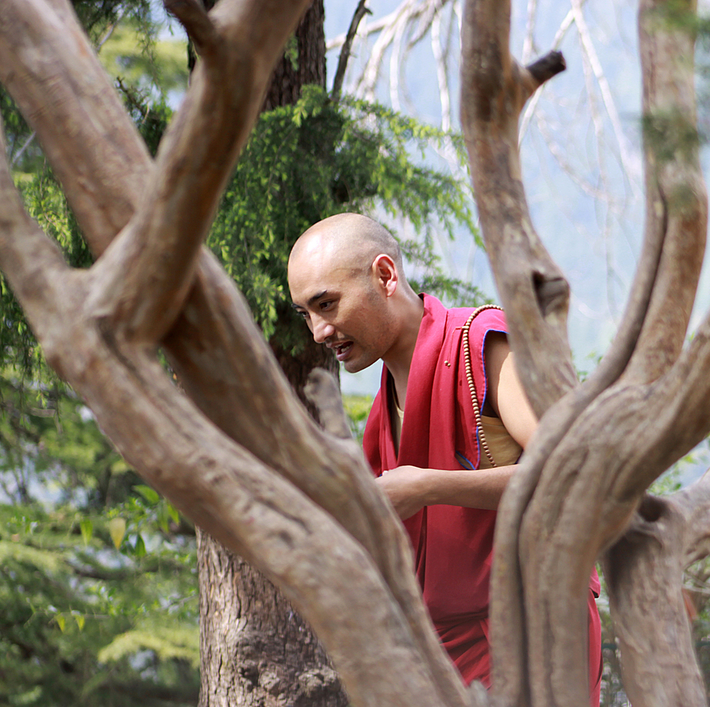 Website Dharmsala man in tree.jpg