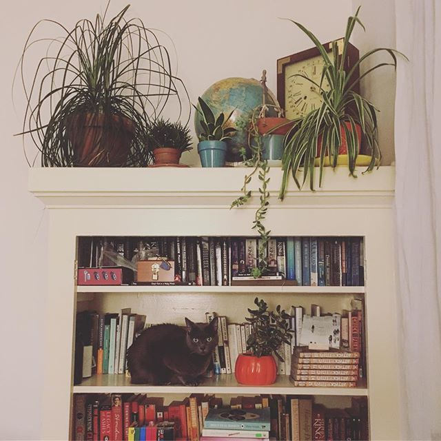 My new favorite hashtag is #catsandplants