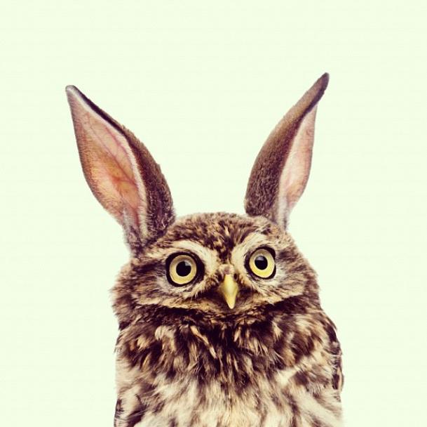 Owlbit