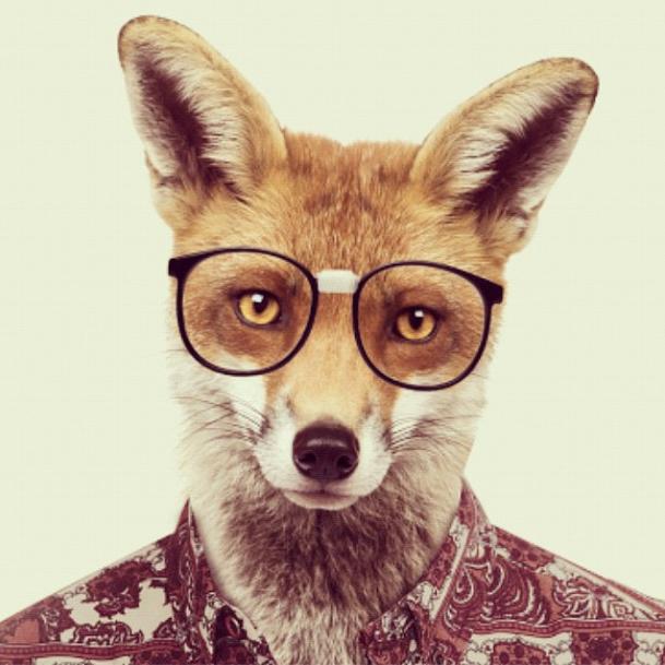 Nerdy fox