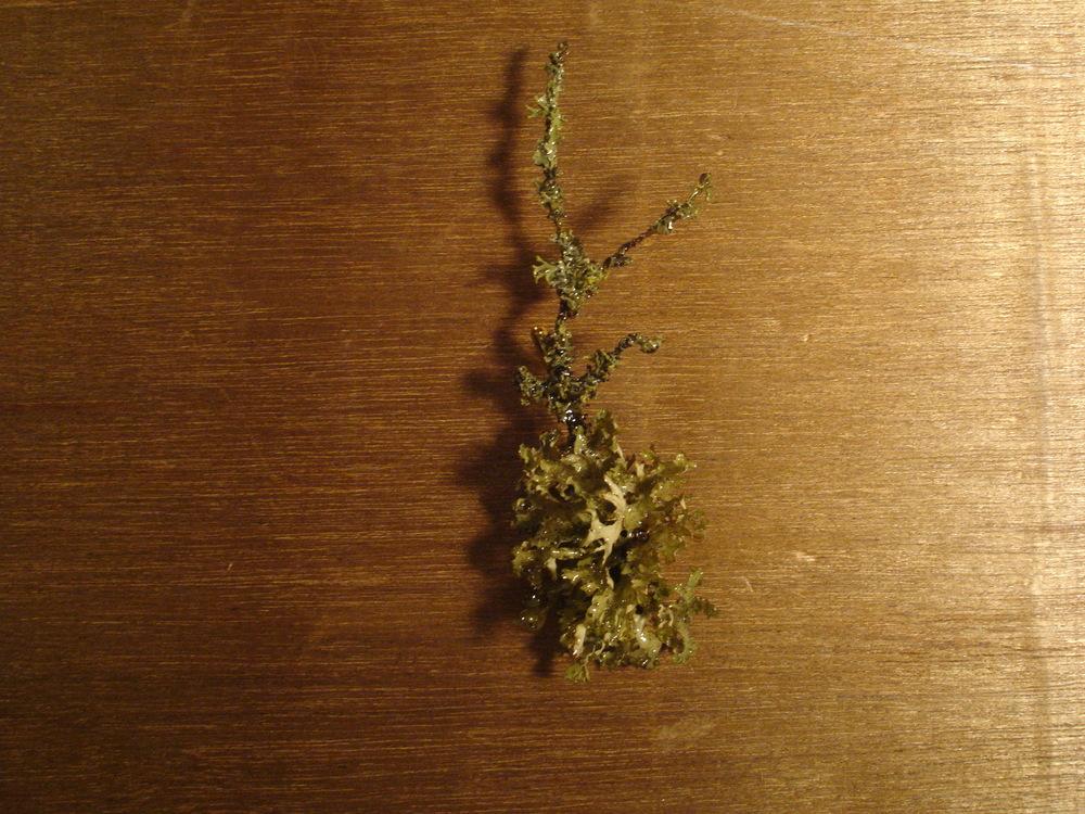 LICHEN Brooch - tree jewels