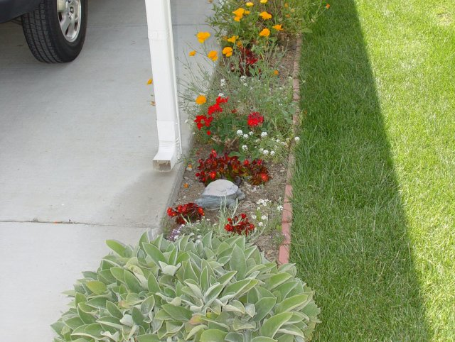 driveway side garden