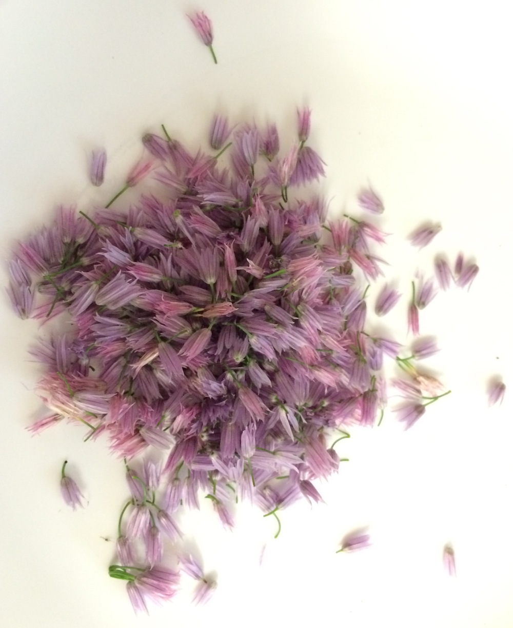 Chive Blossoms (separated)
