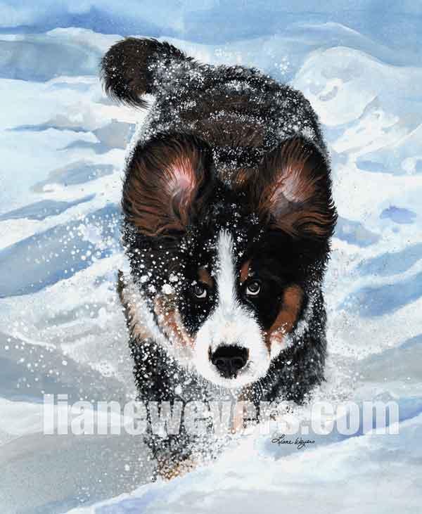 SnowPlow_WM_web.jpg