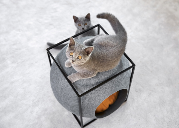 cocoon-furniture-for-cats.jpg