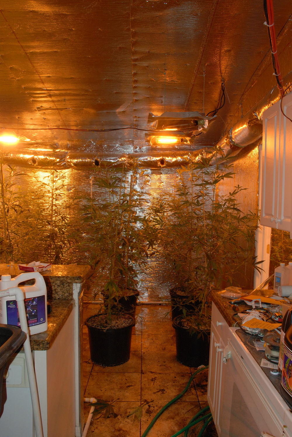 The entire house was converted to either grow or support the grow operation.