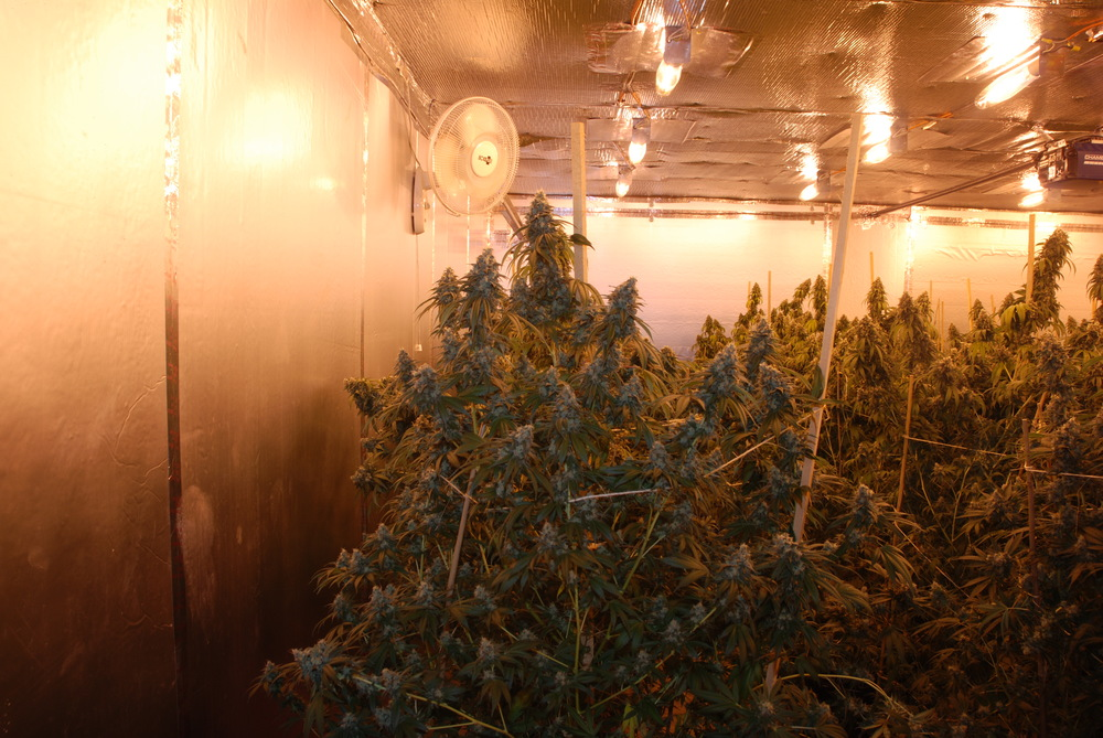 PHOTO:  Images form a marijuana grow house operation taken down by the Cape Coral Police Department VIN and SCU units.  (Photo Courtesy of Cape Coral Police Department)