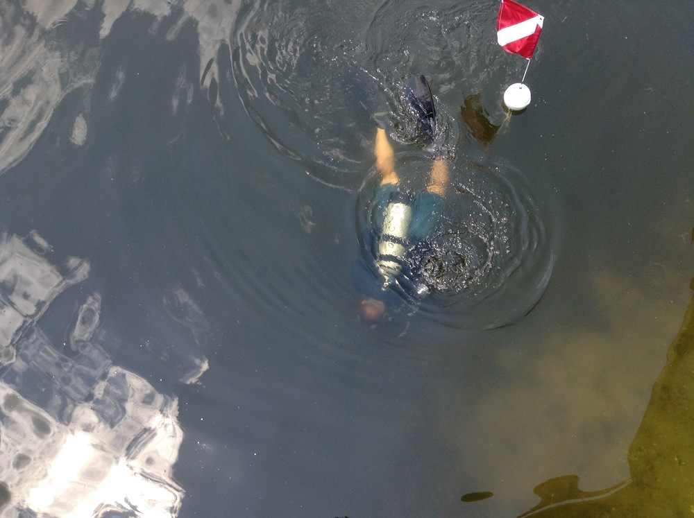 PHOTO: Diver in the Water. Cpl. Bob Slager conducts a grid search in a North Cape Coral canal. (Photo Courtesy of Cape Coral Police Department)