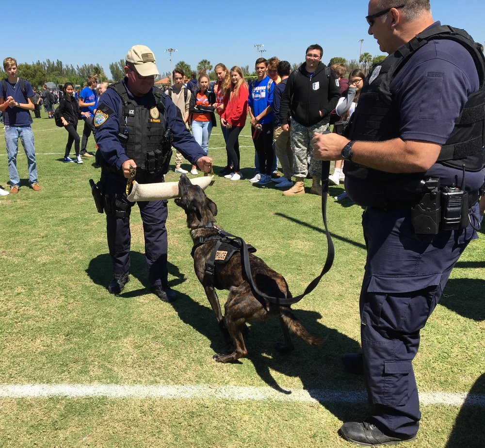 K-9 Arca and her handler K-9 Ofc. Reese demonstrate some bite work, with Sgt. Frantz in the daring spot. (Photo Courtesy of Cape Coral Police Department)