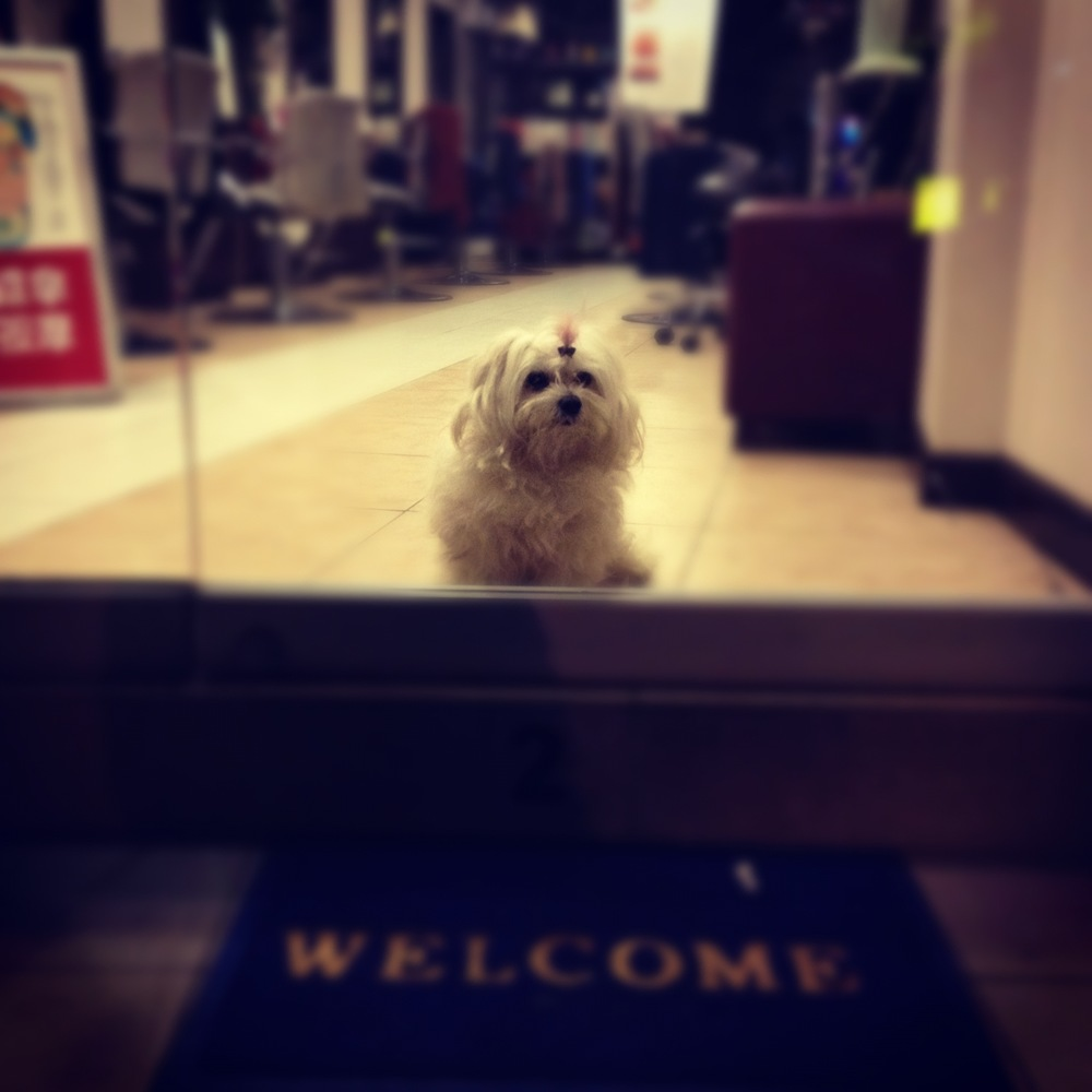 Chinatown Dog.jpeg