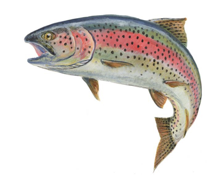 Taylor smith music blog for Fish hatchery ohio