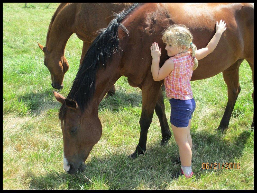 horseswithheart-291x300.jpg