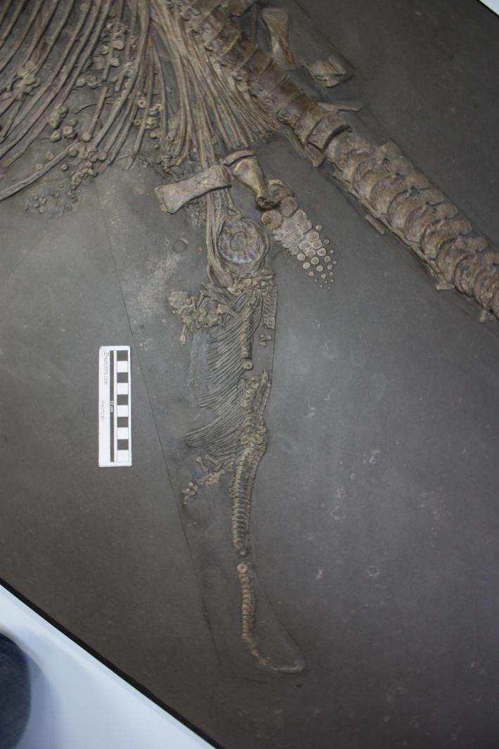 ichthyosaur.jpg