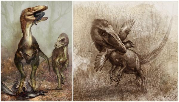 sinocalliopteryx-plos.jpg