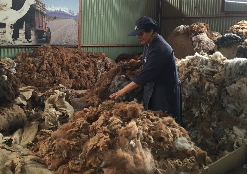 Sortering av alpakkaull hos Michell i Arequipa.