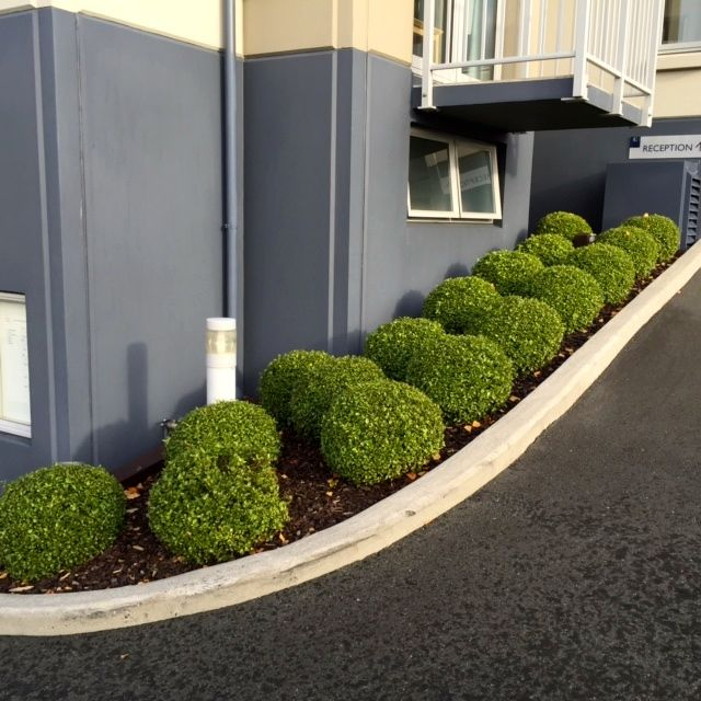 boxwood approaching reception