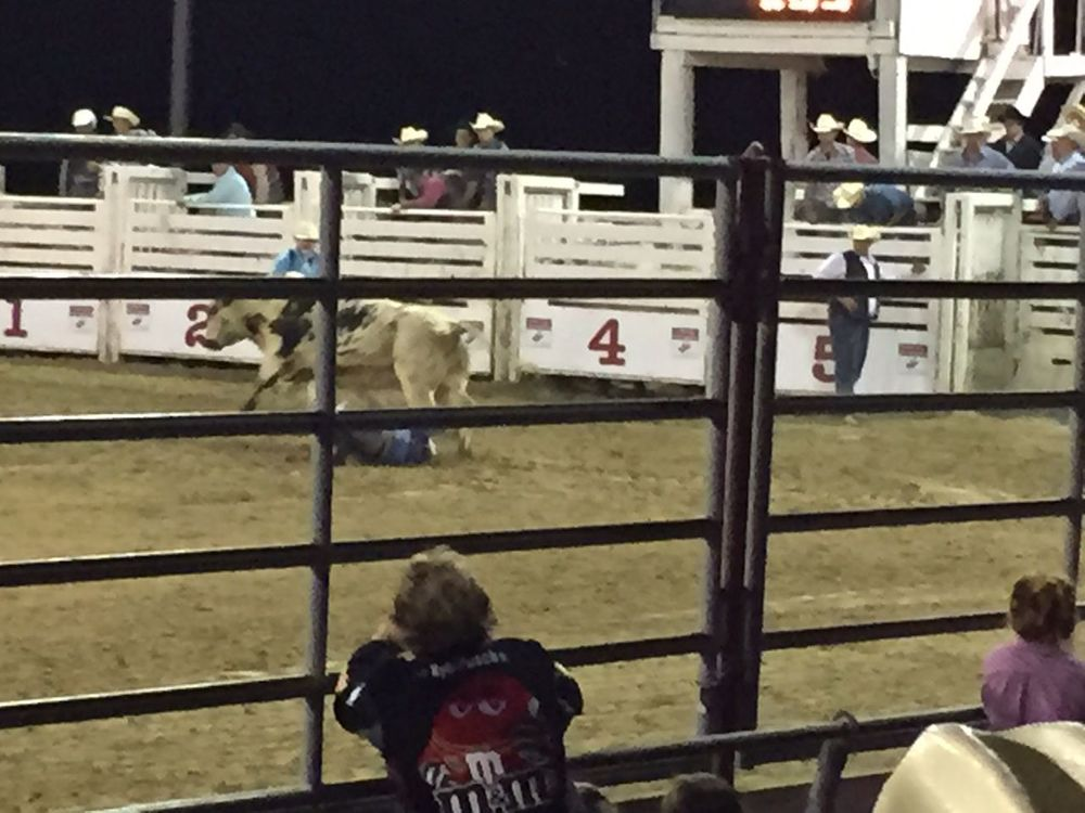 The rider has been thrown off and is momentarily under the bull.
