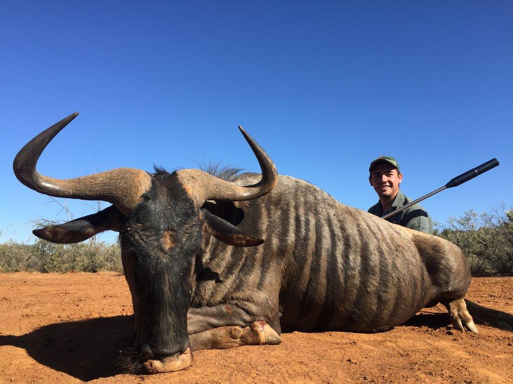 """29"""" Blue wildebeest"""