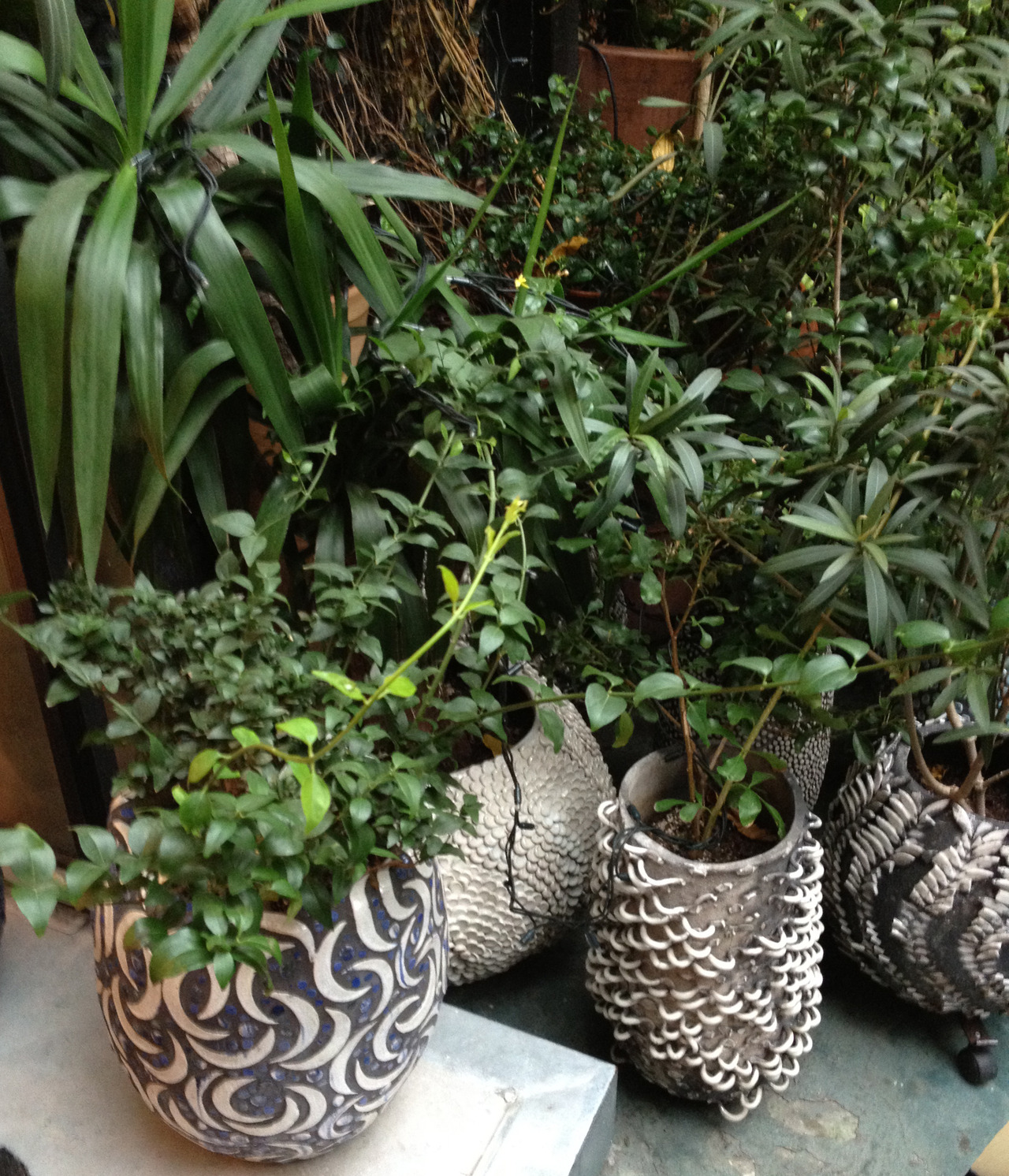 even the plant pots are beauts @ 10 corso como
