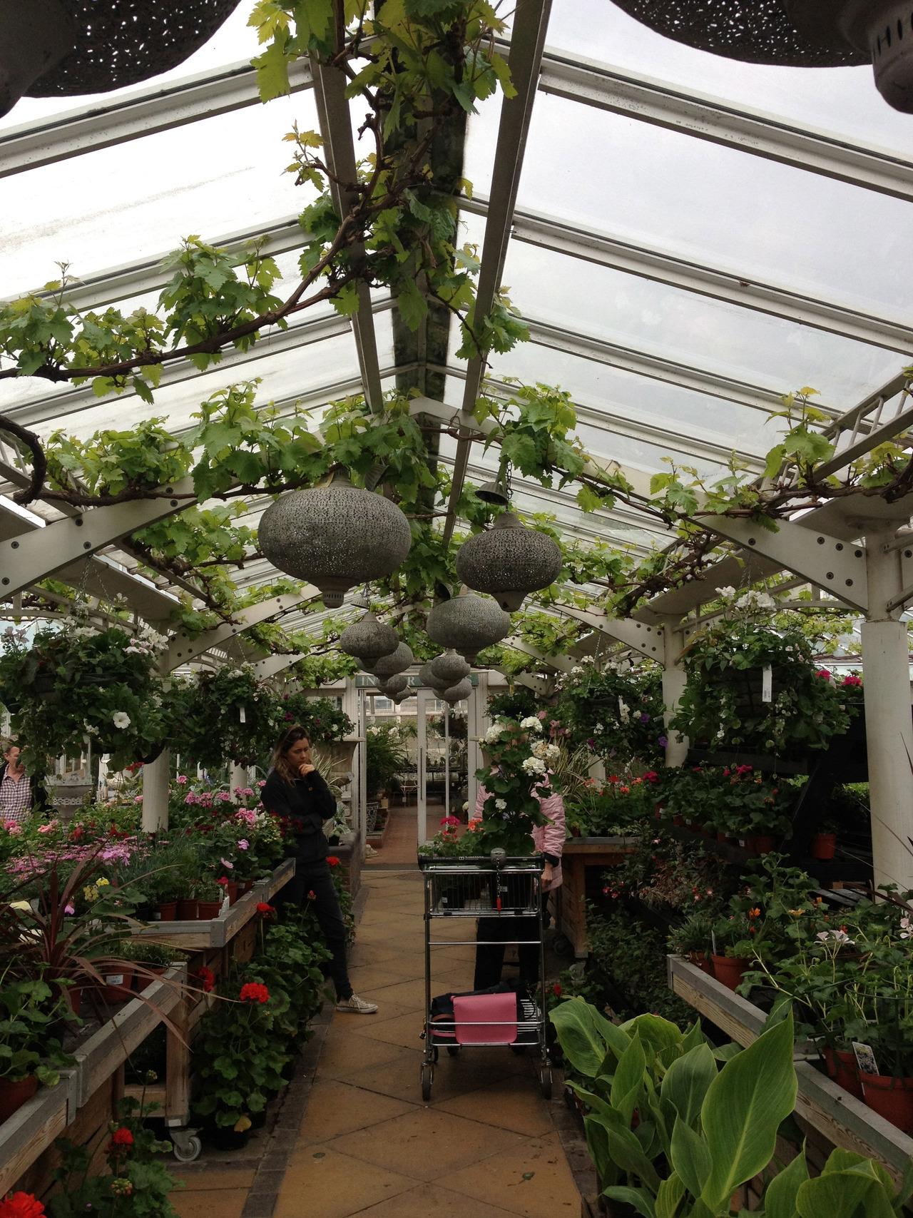 My fave sunday spot Clifton nurseries Maida Vale London