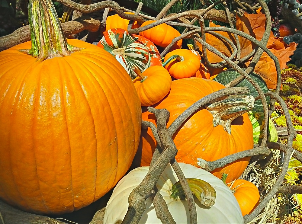 A very unique Pumpkin Patch.