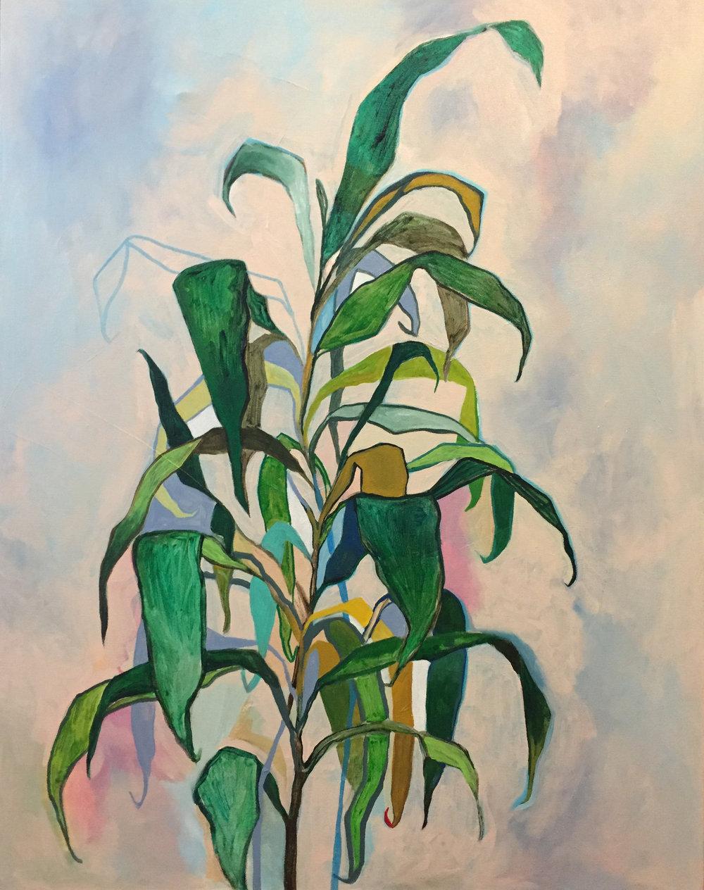 "Plant Study   18"" x 36""   Acrylic on canvas   2016"