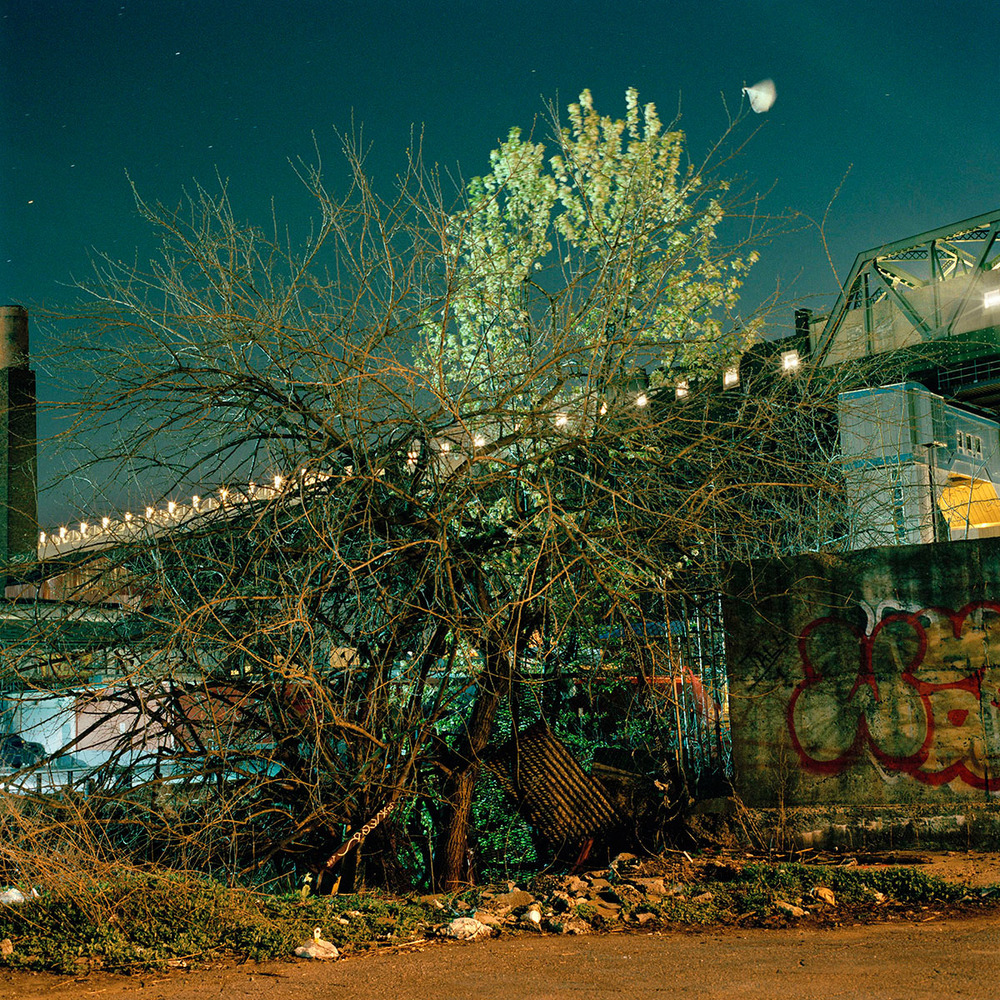 06_Gowanus_Wild_Spring_Tangle.jpg