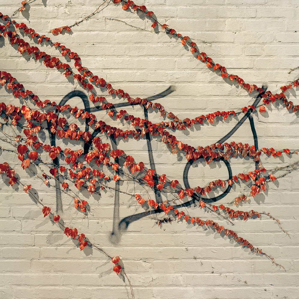 Gowanus_Wild_Red_Vines.jpg