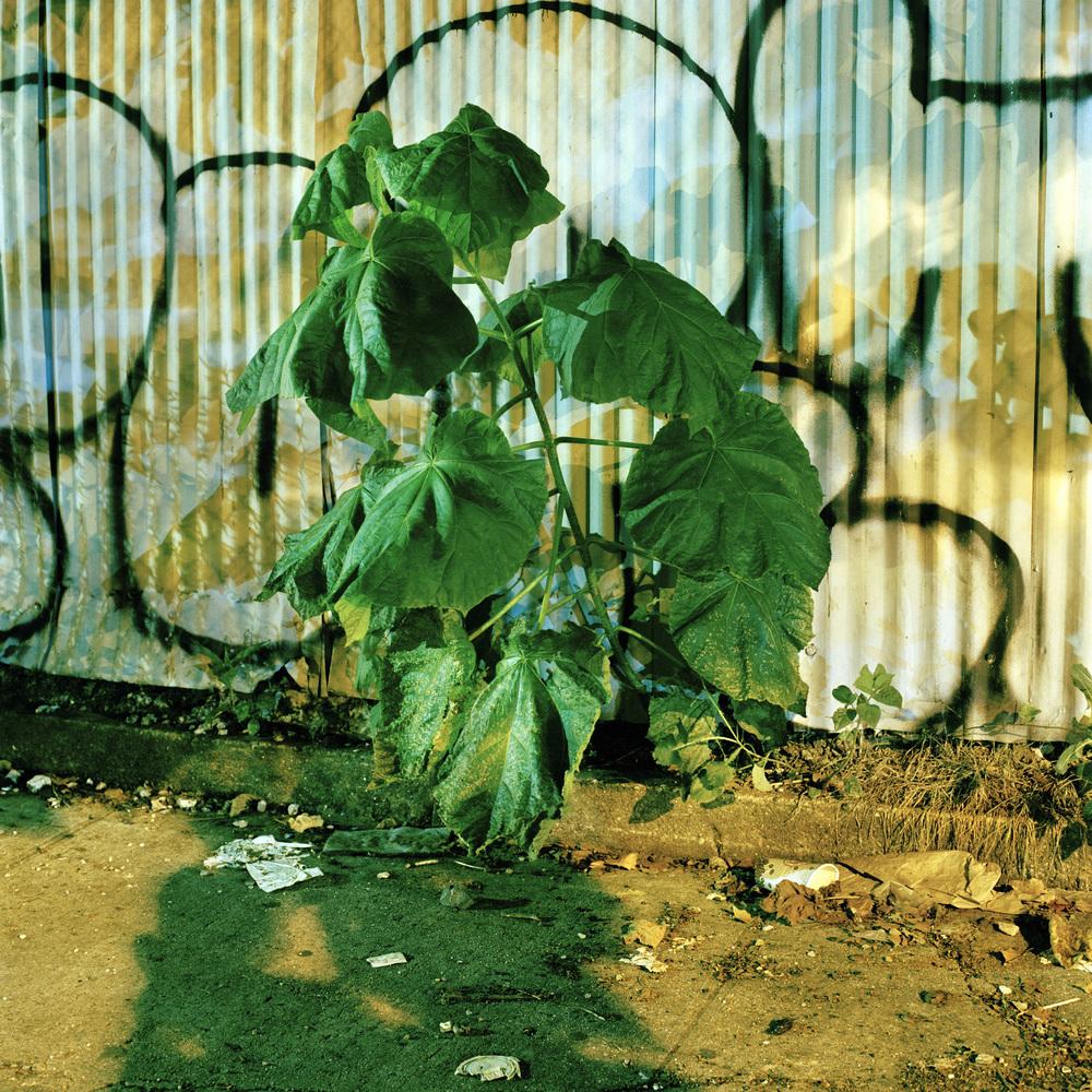 30_junk_weed.jpg