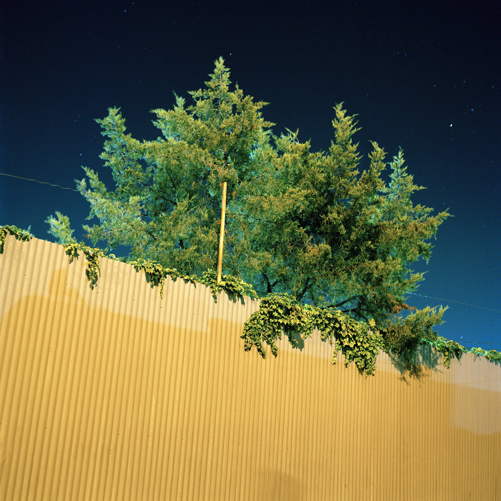 38_fluorescent_tree.jpg