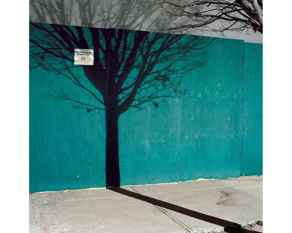 56_Miska_Draskoczy_Gowanus_Wild_tree_shadow_4x5.jpg