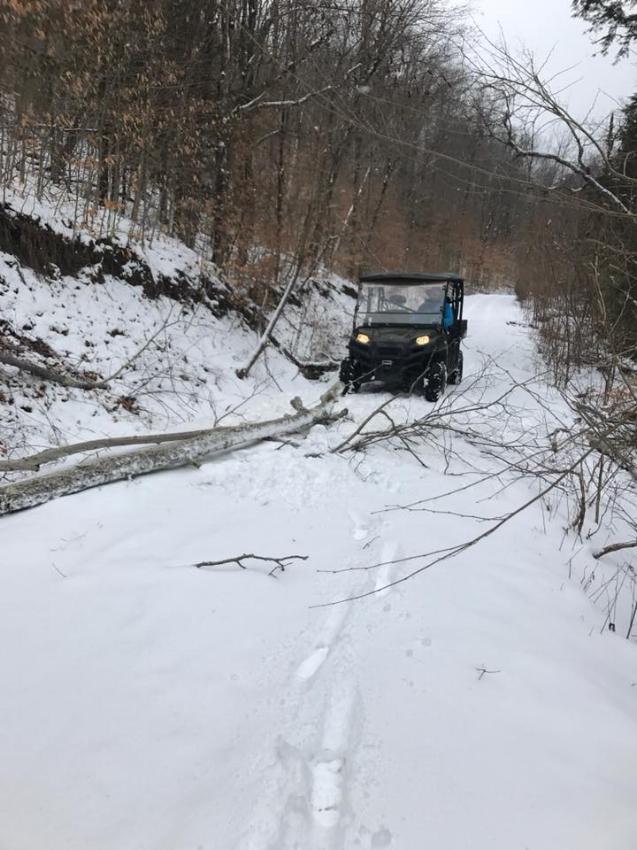 winter damage 2018c.jpg