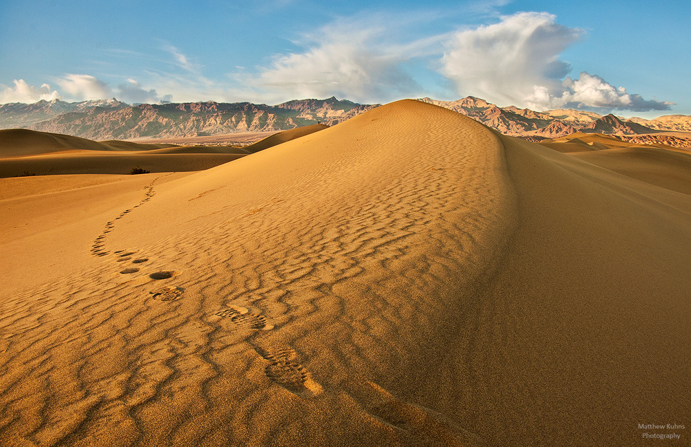 Tracks in the Sand: Mesquite sand dunes.