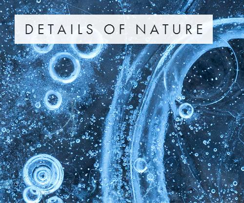 Details of Nature.jpg