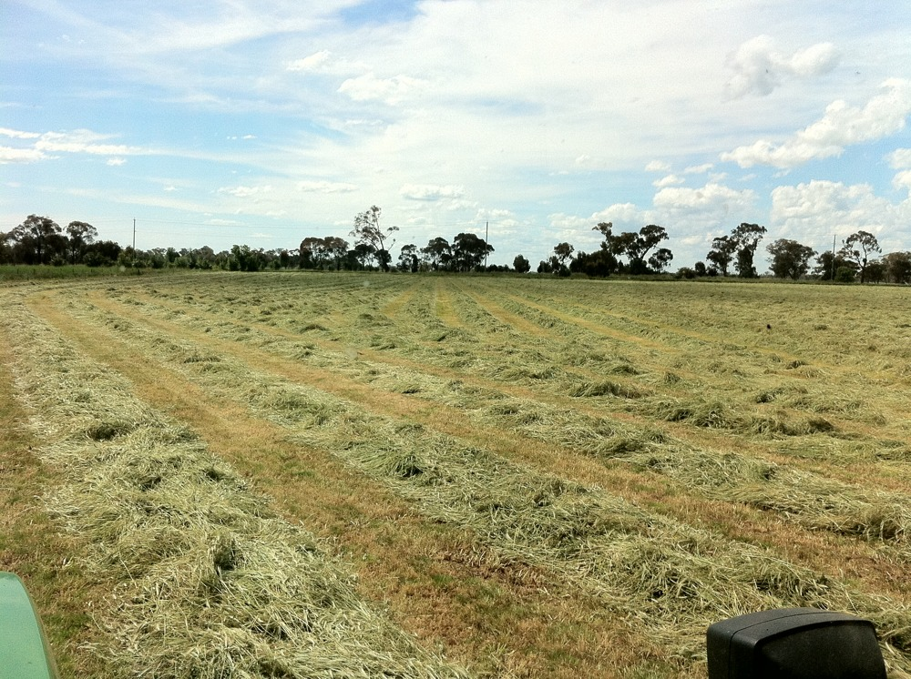 Spending my day cutting Lucerne.