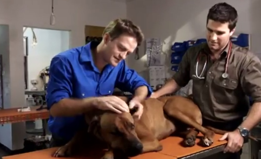 Dr Anthony Bennett and Dr James Carroll are The Village Vets Australia image - Lifestyle