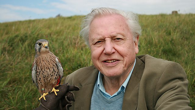 Sir David Attenborough  image copyright - bbc.co.uk