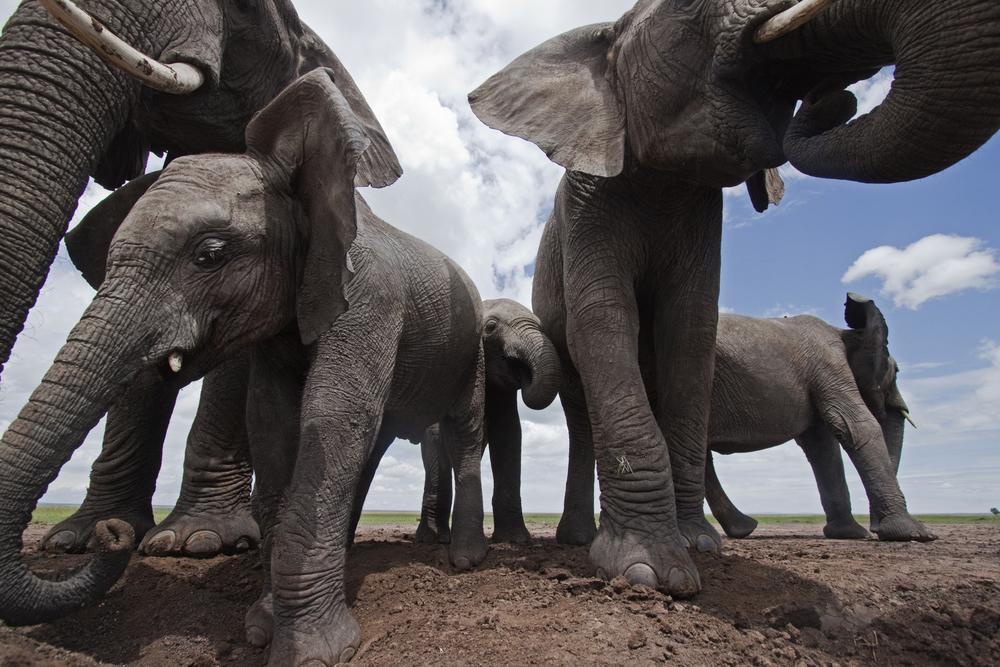 African Elephant in front of double rainbow, image source - Netflix Photograher -Masai Mara, Kenya © naturepl.com / Andy Rouse / WWF
