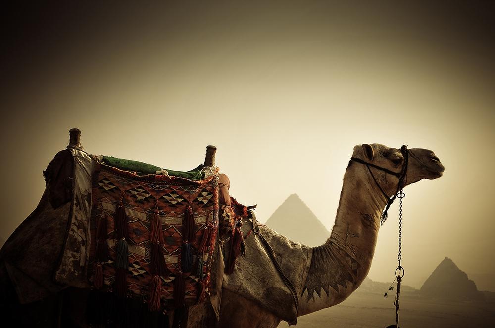 giza-camel.jpg
