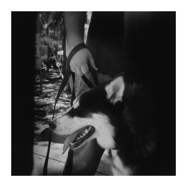 Porttrait of my friend's dog, Remy, photographed with the Holga in Forsythe park, Savannah. You can see where the batteries for the Holga's flash got in the way on the sides of the frame. After exposing this roll I used electrical tape to better secure the AA batteries into their place, so as to keep them out of future shots :)