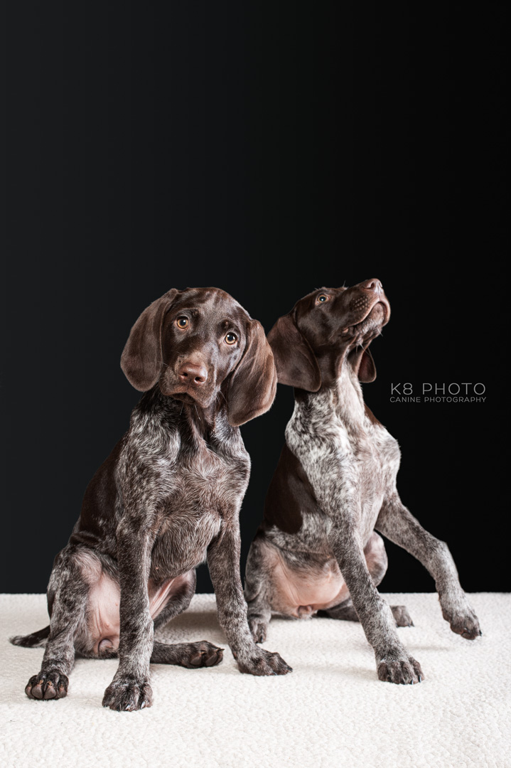 STUDIO PET PORTRAIT SESSIONS