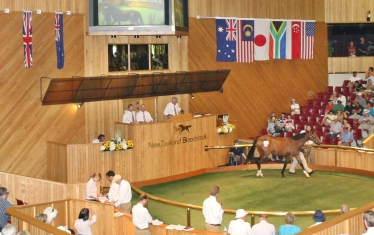 Image courtesy of the New Zealand Bloodstock Limited