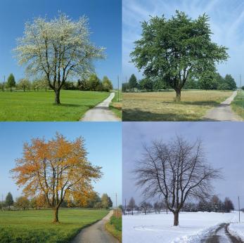 4 Seasons trees iStock_000007235396XSmall.jpg