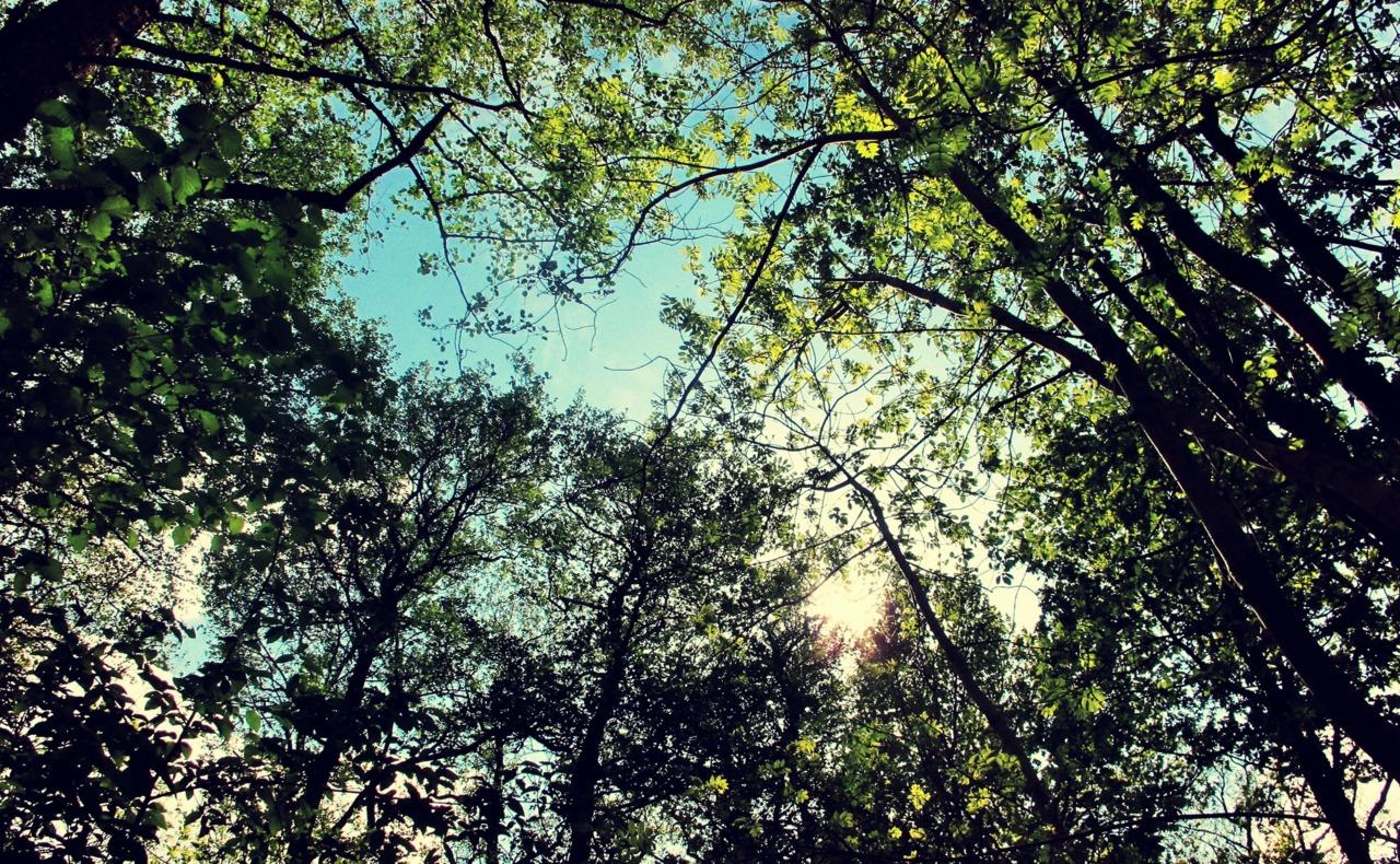 Ser man mot himmelen når man er i en skog, så er det ofte mye grønt i veien, 20 Mai 2011.